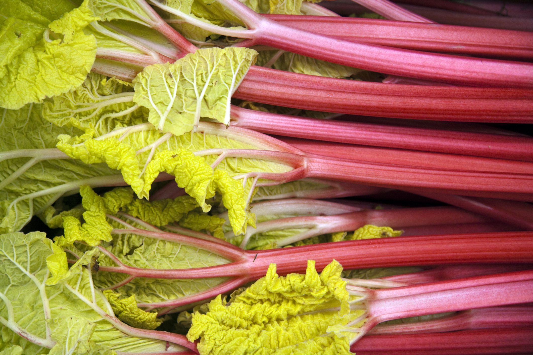 rhubarb-prompt skip hire